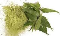 feuilles de neem  bio et équitable en poudre qui est un puissant détoxifiant ayurvédique naturel