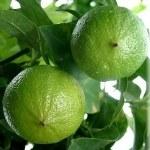 Bergamote - Huile Essentielle